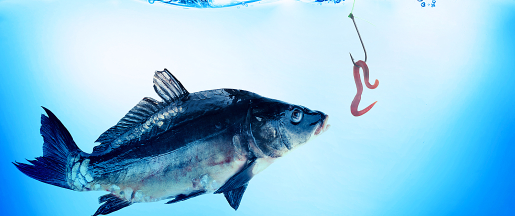 Featured Image for Small Business Phishing Scams: Avoiding the Hook