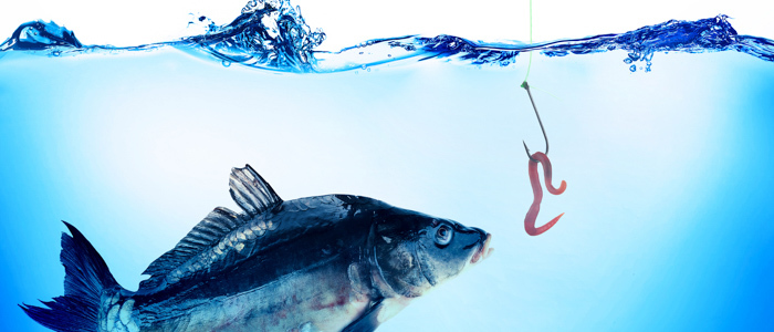 Small Business Phishing Scams: Avoiding the Hook